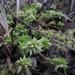 Sphagnum cristatum - Photo (c) eyeweed, μερικά δικαιώματα διατηρούνται (CC BY-NC-ND)