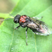 Alder Sawfly - Photo (c) Paul Cook, some rights reserved (CC BY-NC-ND)