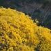 Handroanthus guayacan - Photo (c) Brian Gratwicke,  זכויות יוצרים חלקיות (CC BY)