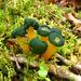 Leotia viscosa - Photo (c) natureluvr01, algunos derechos reservados (CC BY)