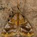 Zanola - Photo (c) sandralamberts, algunos derechos reservados (CC BY-NC)