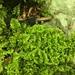 Ctenidium molluscum - Photo (c) Jason Grant, μερικά δικαιώματα διατηρούνται (CC BY)