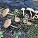 Pholiota highlandensis - Photo (c) Nina Filippova, algunos derechos reservados (CC BY)
