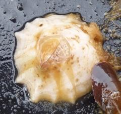 Balanus crenatus image