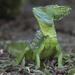 Toloque Verde - Photo (c) Steven Easley, algunos derechos reservados (CC BY-NC)