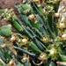 Euphorbia braunsii - Photo (c) Gigi Laidler, algunos derechos reservados (CC BY-NC)