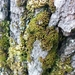 Green Yoke-Moss - Photo (c) kem_luther, some rights reserved (CC BY-SA)