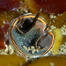 Scaled Worm Snail - Photo (c) Alison Young, some rights reserved (CC BY-NC)