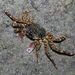 Shore Crabs - Photo (c) Ria Tan, some rights reserved (CC BY-NC-SA)