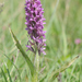 Early Marsh-Orchid - Photo (c) Jeremy Barker, some rights reserved (CC BY-NC)