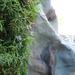 Palmerella debilis serrata - Photo (c) Christian Schwarz, algunos derechos reservados (CC BY-NC)