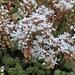 Uva de Gato - Photo (c) ebbalux, algunos derechos reservados (CC BY-NC)