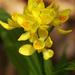 Cephalanthera falcata - Photo (c) ashitaka,  זכויות יוצרים חלקיות (CC BY-NC-SA)