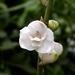 Orquídea del Espíritu Santo - Photo (c) scott.zona, algunos derechos reservados (CC BY-NC)