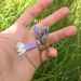 Triteleia grandiflora howellii - Photo (c) littlewild, osa oikeuksista pidätetään (CC BY-NC)