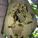 Mud-nesting Paper Wasps - Photo (c) Fundación Geoversity, some rights reserved (CC BY-NC)