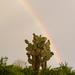 Opuntia echios gigantea - Photo (c) Dolma Alonso,  זכויות יוצרים חלקיות (CC BY-NC-SA)