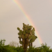 Opuntia echios gigantea - Photo (c) Dolma Alonso, algunos derechos reservados (CC BY-NC-SA)