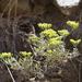 Eriogonum microthecum ambiguum - Photo (c) Janel Johnson, μερικά δικαιώματα διατηρούνται (CC BY)