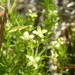 Colchoneta - Photo (c) hikingsandiego, algunos derechos reservados (CC BY-NC)