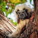 New World Monkeys - Photo (c) Laura C. Correa Blain, some rights reserved (CC BY-NC)
