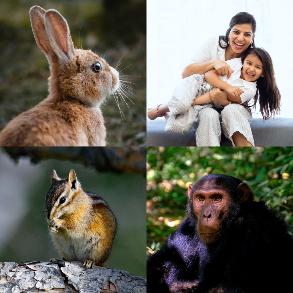 Primates, Rodents, and Allies - Photo no rights reserved