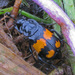 Burying Beetles - Photo (c) Dave, some rights reserved (CC BY-NC-SA)