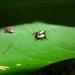 Micrathena patruelis - Photo (c) Frederico Acaz Sonntag, algunos derechos reservados (CC BY-NC)