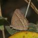 Paryphthimoides difficilis - Photo (c) Filho Manfredini, algunos derechos reservados (CC BY-NC)