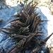 Aloe calcairophila - Photo (c) Franck Rakotonasolo, algunos derechos reservados (CC BY-NC)