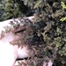 Laurencia pacifica - Photo (c) seavivs, algunos derechos reservados (CC BY-NC)