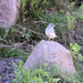 Rhopospina alaudina alaudina - Photo (c) Jonathan M, algunos derechos reservados (CC BY-NC)