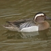 Garganey - Photo (c) ken, some rights reserved (CC BY-NC-ND)