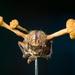 Ophiocordyceps - Photo (c) Danny Newman,  זכויות יוצרים חלקיות (CC BY-NC-SA)