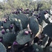 Nopal Redondo - Photo (c) bhall16, algunos derechos reservados (CC BY-NC)
