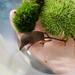 Sorex palustris - Photo (c) Tanner Senti, algunos derechos reservados (CC BY-NC)