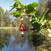 Ribes roezlii - Photo (c) randomtruth,  זכויות יוצרים חלקיות (CC BY-NC-SA)