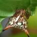 Micrathena peregrinatorum - Photo no hay derechos reservados