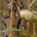 Aulacidea - Photo (c) AnneTanne, μερικά δικαιώματα διατηρούνται (CC BY-NC)