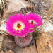Cabeza de Viejo - Photo (c) raklopez, algunos derechos reservados (CC BY-NC)
