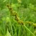 Multiflorae - Photo (c) John Beetham, algunos derechos reservados (CC BY-NC-SA)