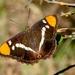 Mariposa Monjita de California - Photo (c) randomtruth, algunos derechos reservados (CC BY-NC-SA)