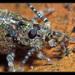 Machilidae - Photo (c) Christophe Quintin, algunos derechos reservados (CC BY-NC)