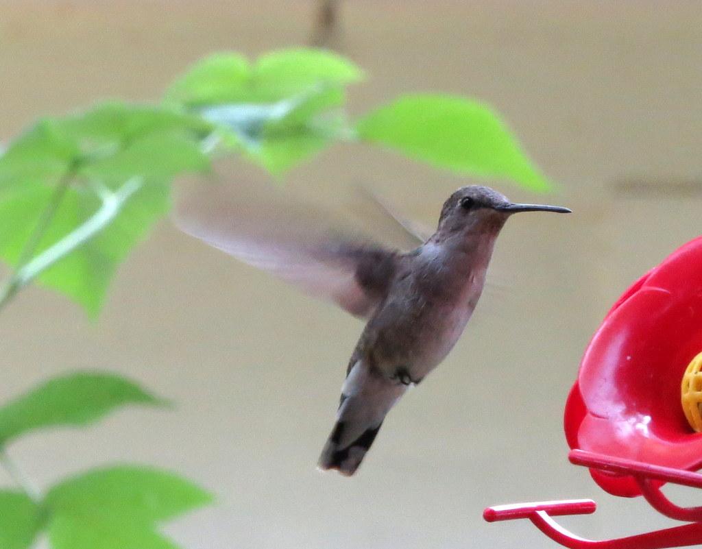 /Birds