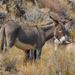 Donkey - Photo (c) Grigory Heaton, some rights reserved (CC BY-NC)