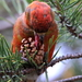 Crossbills - Photo (c) Наталья Петрова, some rights reserved (CC BY-NC)
