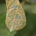 Hongos de Roya - Photo (c) Tim N, algunos derechos reservados (CC BY-NC)