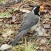 Saltator aurantiirostris - Photo (c) Euge, μερικά δικαιώματα διατηρούνται (CC BY-NC)