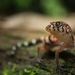 Yucatán Banded Gecko - Photo (c) betorquato, some rights reserved (CC BY-NC)