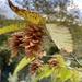 Μελιόγαυρος - Photo Δεν διατηρούνται δικαιώματα